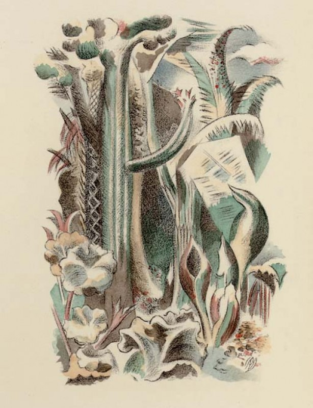 Illustration depicting dense flora and founa