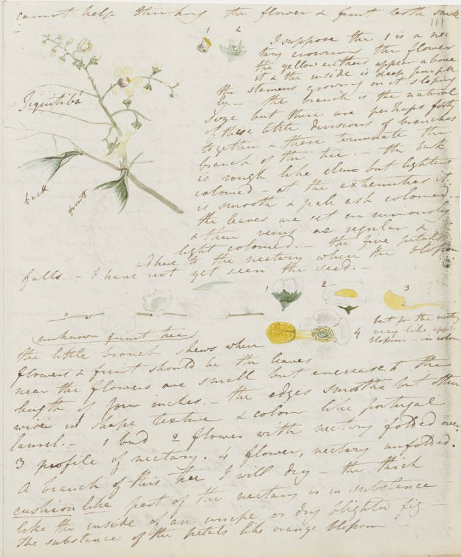 Sheet of paper with hand written notes, illustrated with watercolours of flowers